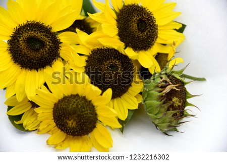 bright bouquet of sunflowers on white background #1232216302