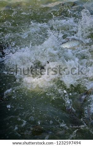 Fish in the river #1232597494