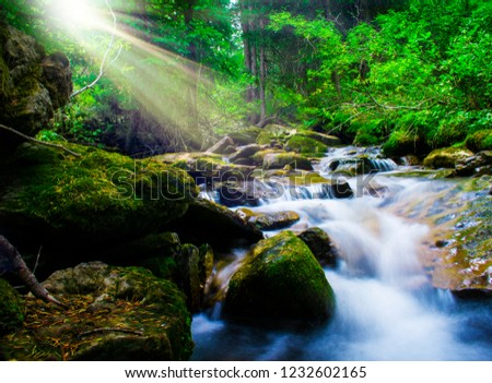 Sun Beams Through Trees Over Cool Mountain Stream Flowing Through Lush Green Forest #1232602165