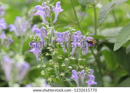 NYC Flower Macro #1232615770