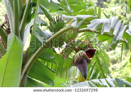 Fruit tree in Vietnam #1232697298