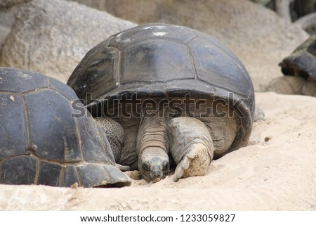 turtles of the world #1233059827