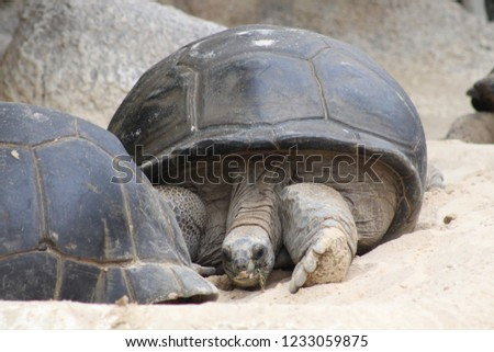 turtles of the world #1233059875