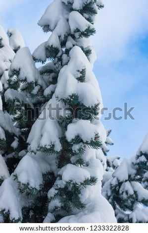 Green fluffy fir tree in the snow #1233322828