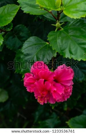 Saribbean flower, SVG #1233536761