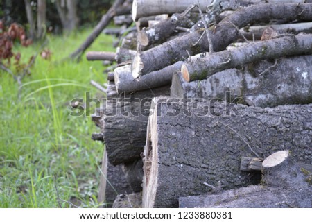 Trees for firewood   #1233880381