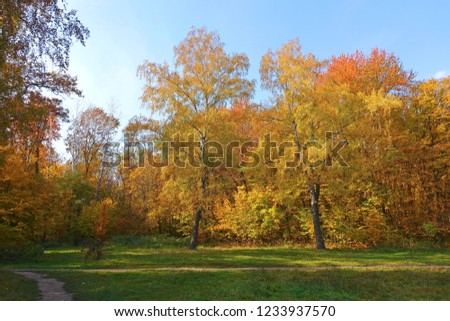 Autumn landscape with colorful trees alone path in the meadow and blue sky. #1233937570