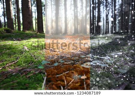 three season in forest #1234087189