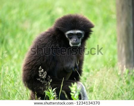 Wildlife animal nature #1234134370