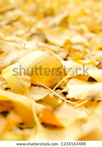 The lawn of the park in autumn is covered with red and yellow fallen leaves #1234163488