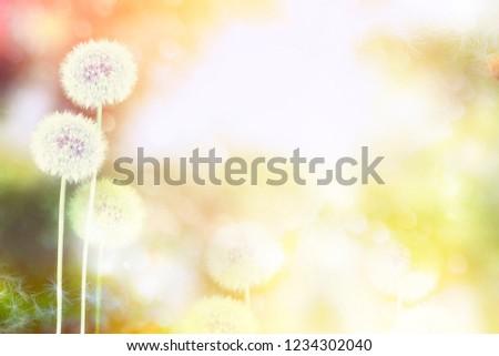 Fluffy dandelion flower against the background of the summer landscape. #1234302040