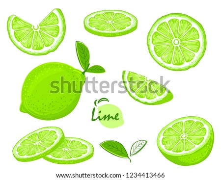 Fresh lime fruits, collection of illustrations #1234413466