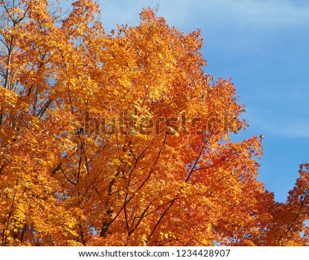 Fall in West Virginia displays the more majestic colors of autumn for which the Northeast is so famous. #1234428907