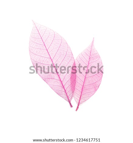 Beautiful decorative skeleton leaves on white background, top view #1234617751