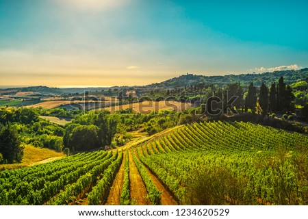 Casale Marittimo village, vineyards and countryside landscape in Maremma. Pisa Tuscany, Italy Europe. #1234620529