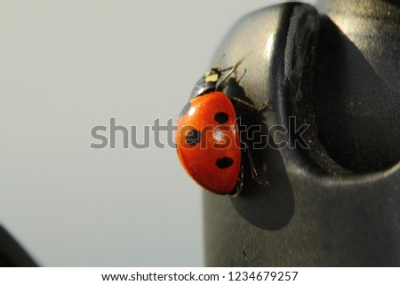 close up ladybug #1234679257