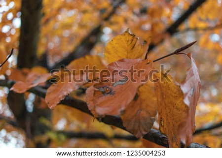 Autumn. Multicolored maple leaves lie on the grass.  #1235004253