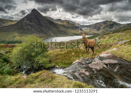 Landscape image of red deer stag by river flowing down mountain range in Autumn Royalty-Free Stock Photo #1235113291
