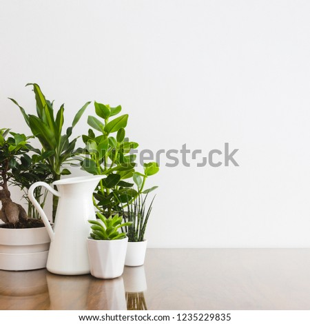 Houseplants in white flowerpots on wooden table against white wall - copy space.  #1235229835