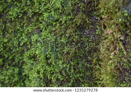 Green moss on tree bark #1235279278