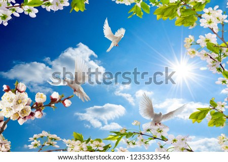 birds flying with joy in spring