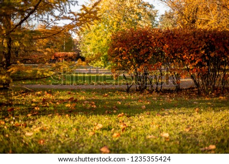 autumn landscape with trees and leaves #1235355424