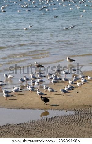 Flock of seagulls on a beach. Selective focus. #1235861686