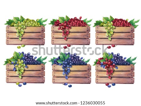 Set of watercolor wooden boxes of grapes decorated with leaves. Hand painted illustration isolated on white background