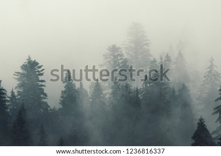 Misty foggy mountain landscape with fir forest in hipster vintage retro style #1236816337