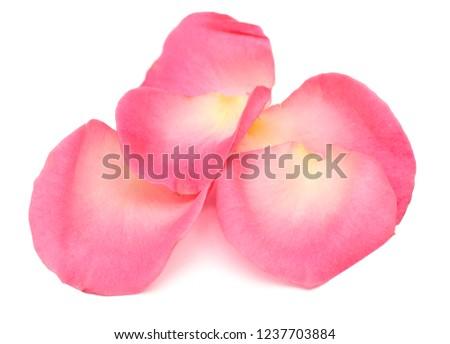 Rose petals on white #1237703884