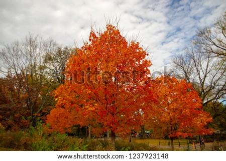 Autumn trees in Central Park , New York. New York, NY, USA- November 5, 2018 #1237923148