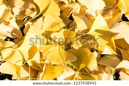 autumn leaves perfect for seasonal use. #1237938943