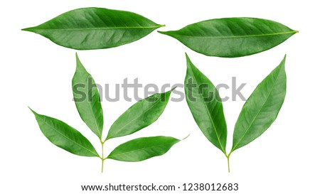 Green lychee leaf on a white background. #1238012683
