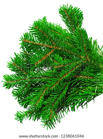 Fir branch isolated on white background #1238061046