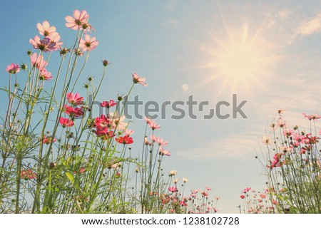 Back light in the sun, vintage colors, colorful flowers bloom in winter. #1238102728