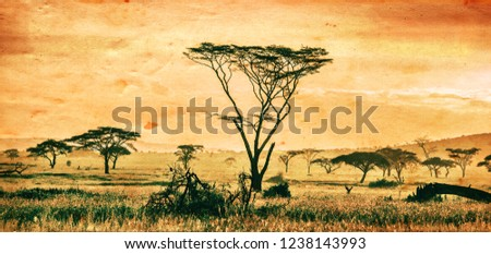 African landscape, the Serengeti National Park in Tanzania #1238143993