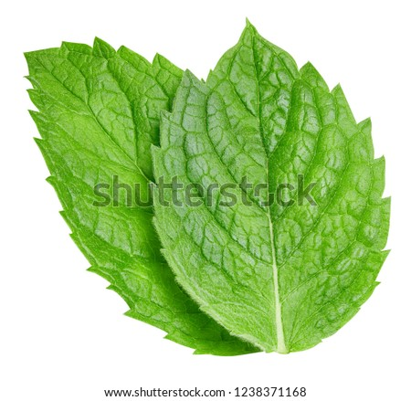 Mint leaves isolated on white. Mint Clipping Path #1238371168