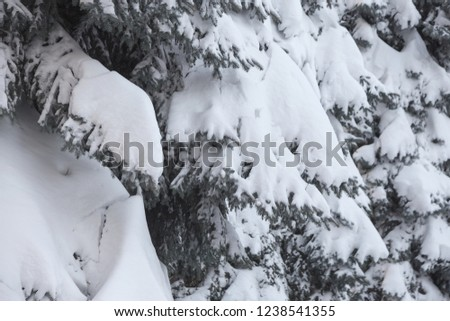 Winter snowy pine Christmas tree scene. Fir branches covered with hoar frost Wonderland. Winter is coming New year. Calm blurry snow flakes winter background with copy space. #1238541355