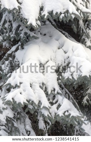 Winter snowy pine Christmas tree scene. Fir branches covered with hoar frost Wonderland. Winter is coming New year. Calm blurry snow flakes winter background with copy space. #1238541415