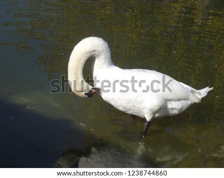 Animals in nature #1238744860