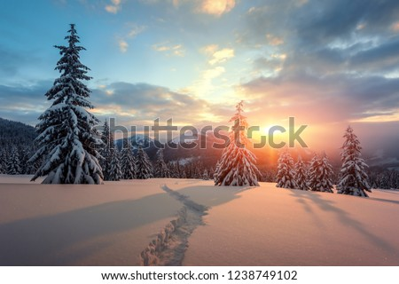 Fantastic orange winter landscape in snowy mountains glowing by sunlight. Dramatic wintry scene with snowy trees. Christmas holiday concept. Carpathians mountain, Ukraine, Europe #1238749102