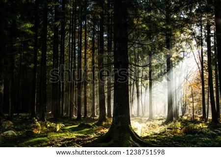 sunbeam in the autumn woods #1238751598