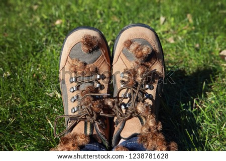 Burdock burrs stuck on hiking boots after walking outdoors #1238781628