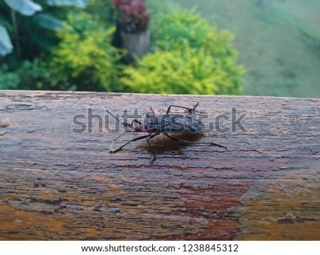 Triatominae on wood