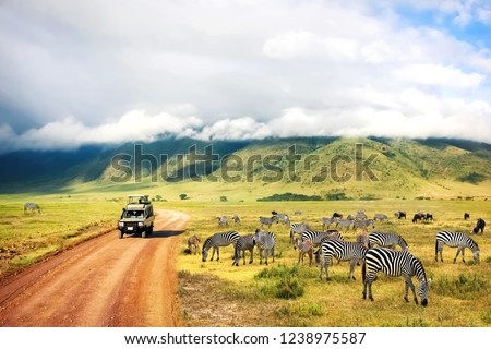 Wild nature of Africa. Zebras against mountains and clouds.  Safari in Ngorongoro Crater National park. Tanzania. Royalty-Free Stock Photo #1238975587