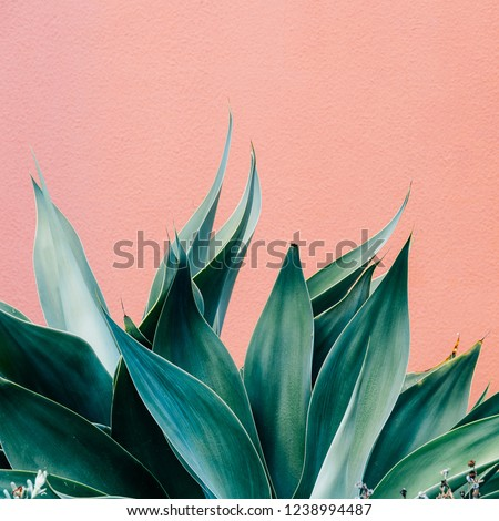 Plants on pink fashion concept. Green on pink wall background.  Minimal plant design #1238994487
