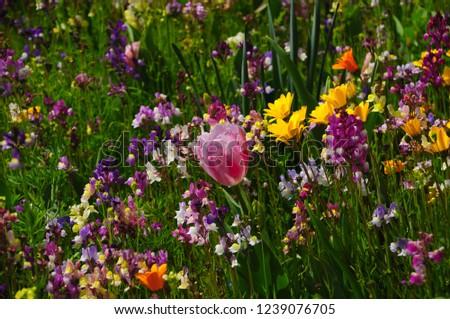 Colorful Spring garden #1239076705