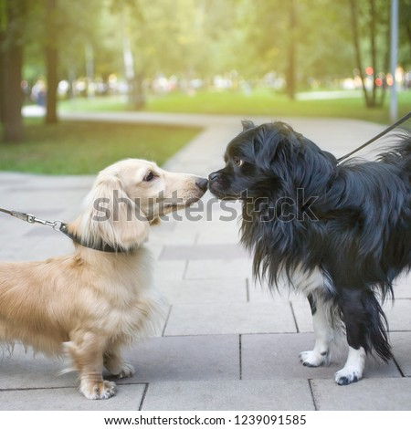 two dogs on a walk get to know each other #1239091585