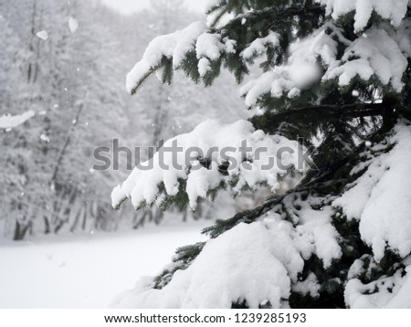Coniferous trees and bushes in the forest covered with snow #1239285193