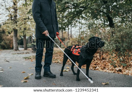 Guide dog helping blind man in park. #1239452341
